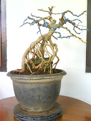 Bonsai-Jegeg Gallery( style sekijoju)
