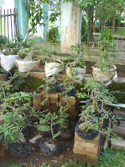 bonsai-Ato Nursery