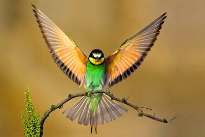لاجمل الطيور سبحان الله - اجمل الطيور