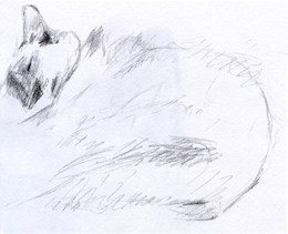 [Cats2.jpg]