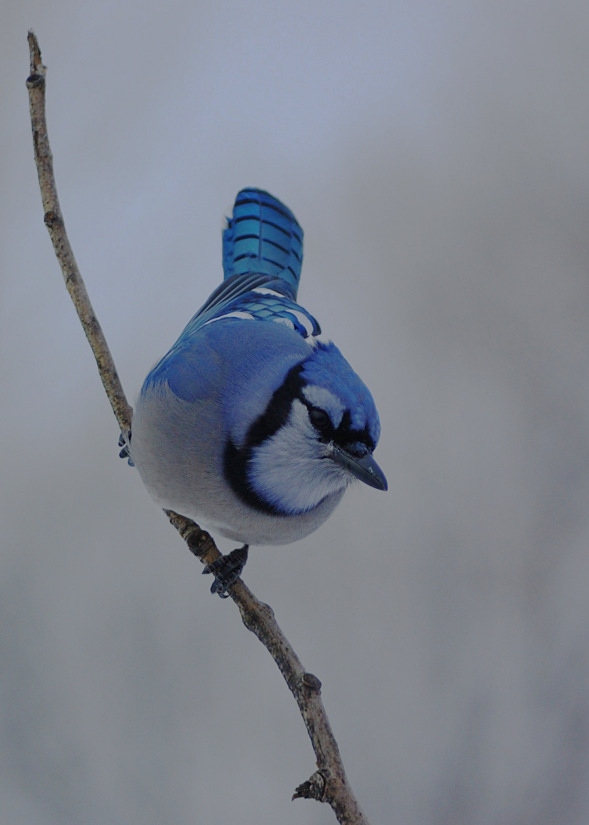 This Is Why the Color Blue Is Actually Rare in Nature ...