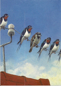 Bird(s) on the wire