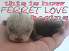 ♥ Ferret ♥ Love ♥...