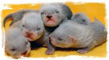 Five Fuzzie Babies ♥