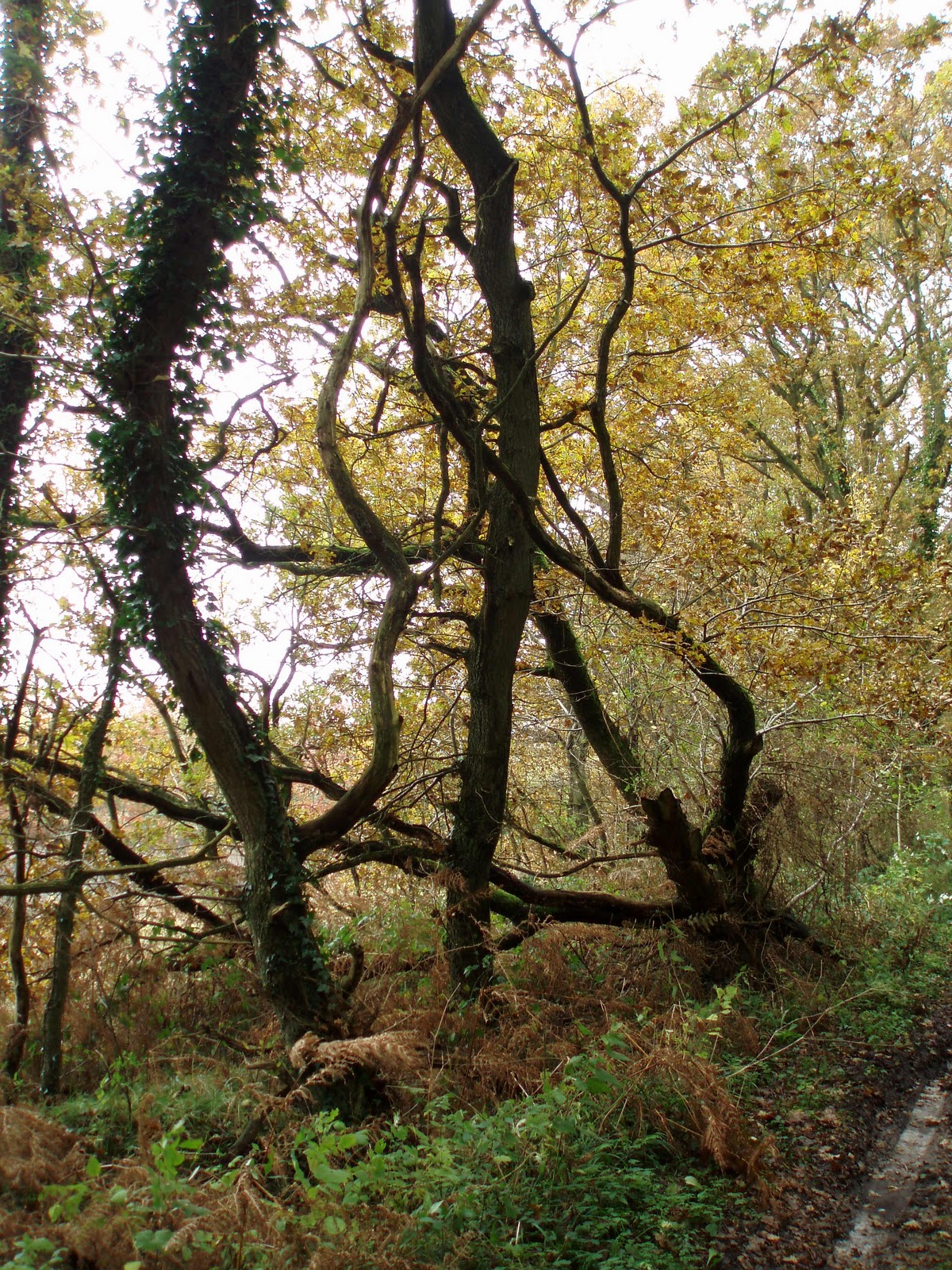 Vi er heldige at bo tæt ved skoven. ved indgangen til skoven er dette