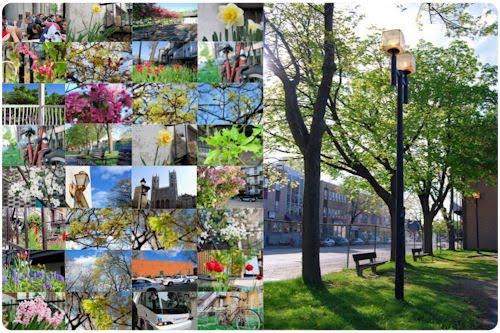 Fotografías de Montreal (La llegada de la Primavera) 33 foto  preciosas y gratis para todos