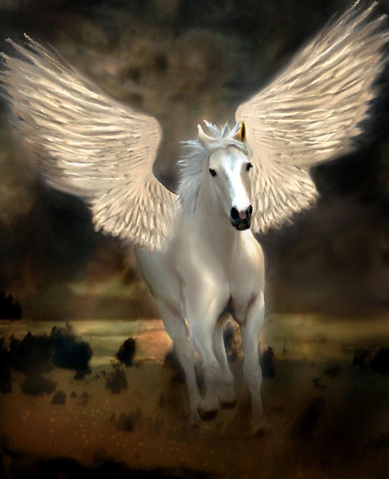 Banco de Im... Pegasus 33