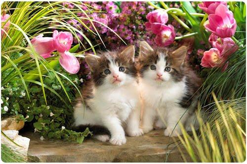 Para quienes adoran los gatitos. (15 wallpapers de mininos)
