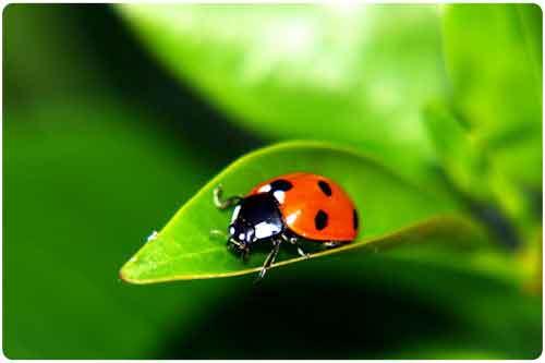 Imágenes de la naturaleza (33 fotos lindas y verdes)