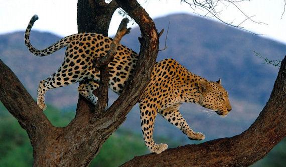Wild Animals (5 wallpapers for your desktop)