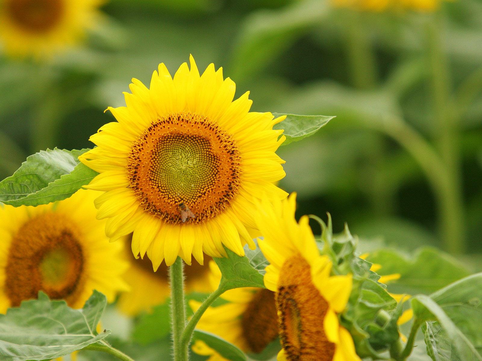 Banco de im genes las mejores im genes de flores en el - Fotos jarrones con flores ...