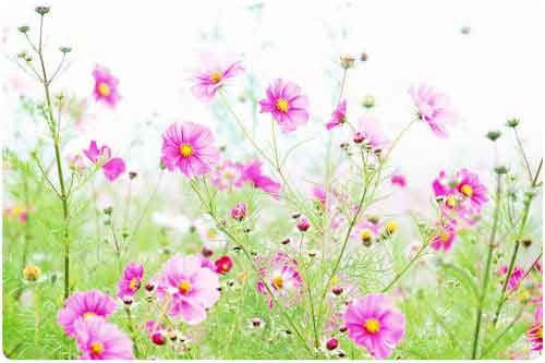 Las mejores imágenes de flores en el mundo (33 fotos)
