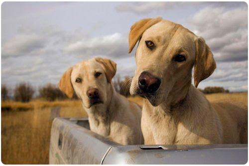 Imágenes y fotografías de perritos (25 elementos)