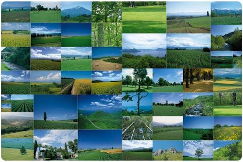 Un paseo por los verdes prados (50 imágenes de 1300x923)
