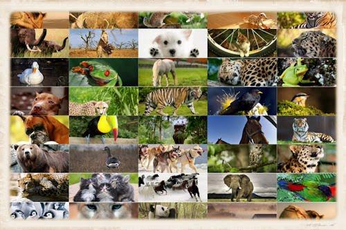 Perros, gatitos, aves, ositos y ranas (39 imágenes)