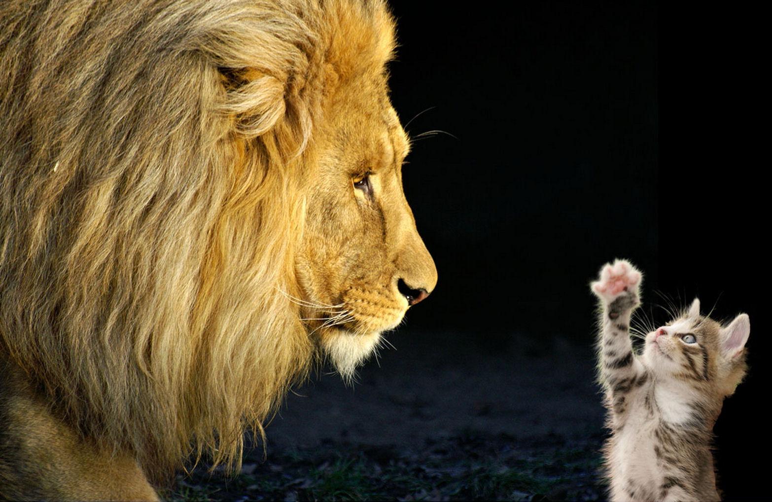 Animales Divertidos Fotos y Vectores gratis Freepik - fotos de animales divertidos