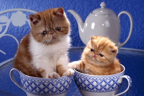 Fotografías de gatitos (7 elementos)