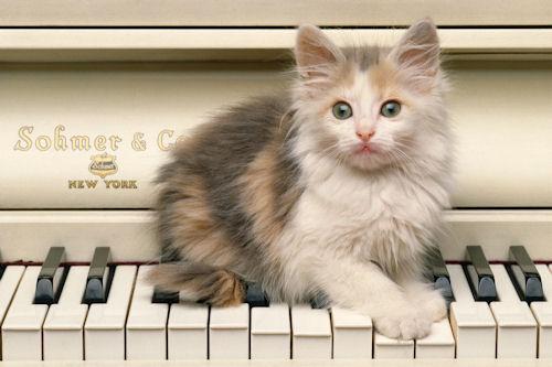 Pequeño gatito noruego (Norwegian kitten)