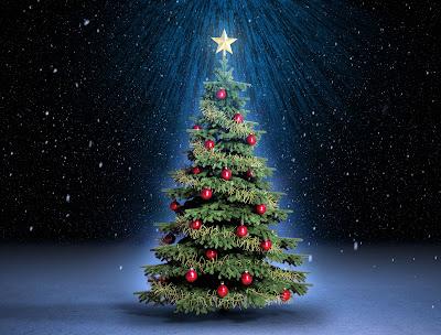 Especial de Fin de Año (Fotos de Árboles de Navidad)