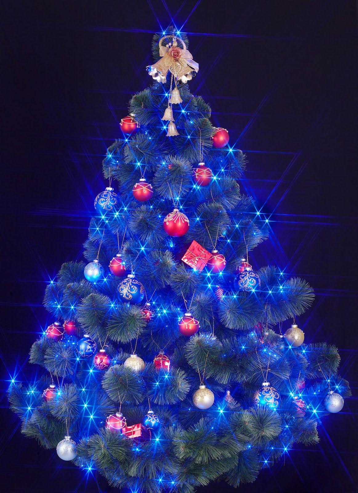 Especial de Fin de Año (Fotos de Árboles de Navidad)   Banco de ...