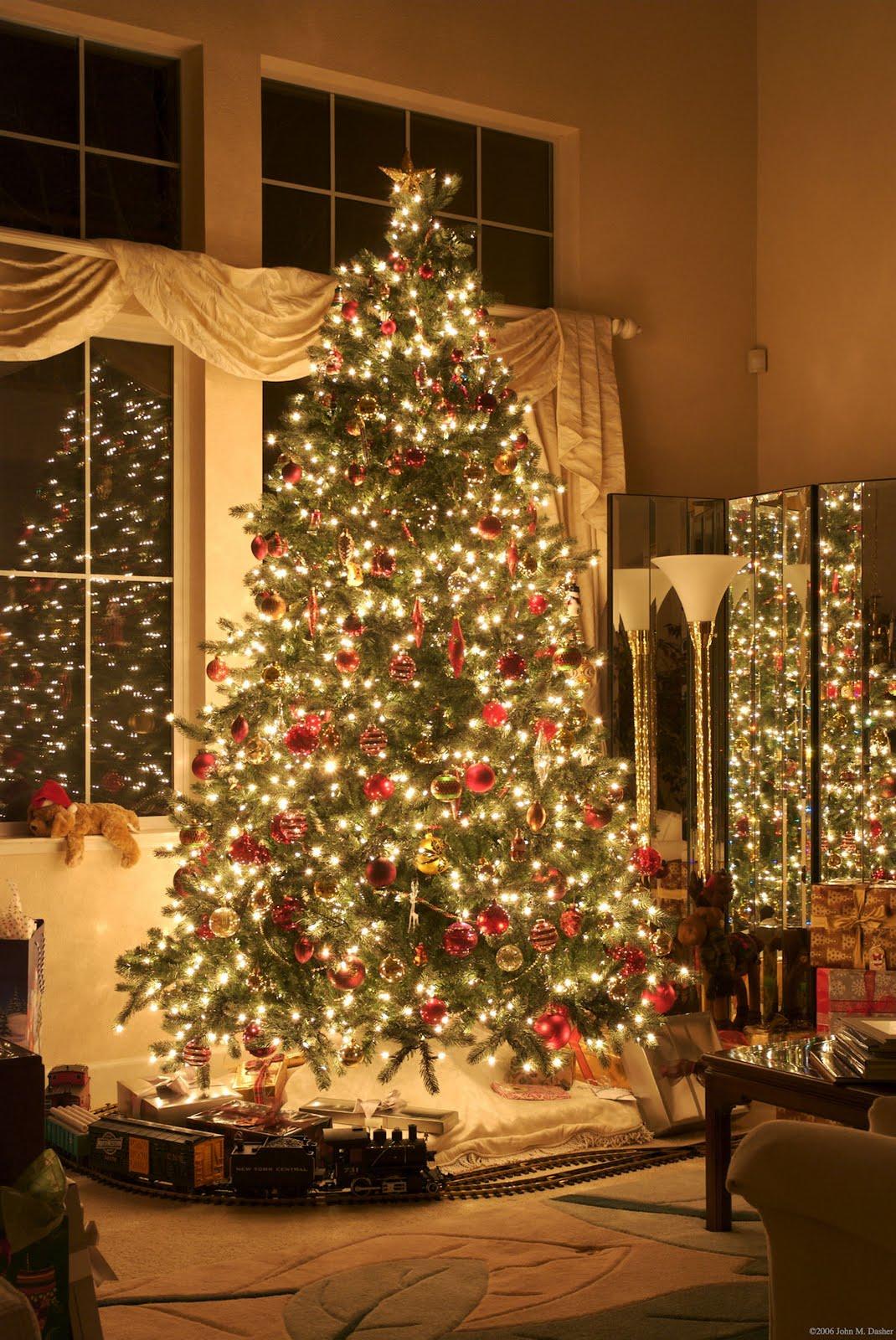 Banco de im genes especial de fin de a o fotos de - Ver arboles de navidad ...
