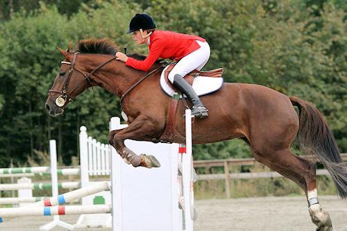 Fotografías de caballos IV (Equinos de Pura Sangre)