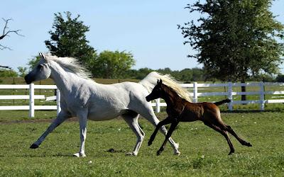 Fotografías e Imágenes de Caballos. Horses Pictures and Photos