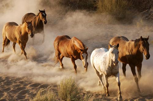 Fotografías de caballos III (Equinos de Pura Sangre)