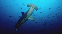 Viaje por el fondo marino y Animales Acuáticos - SeaBed