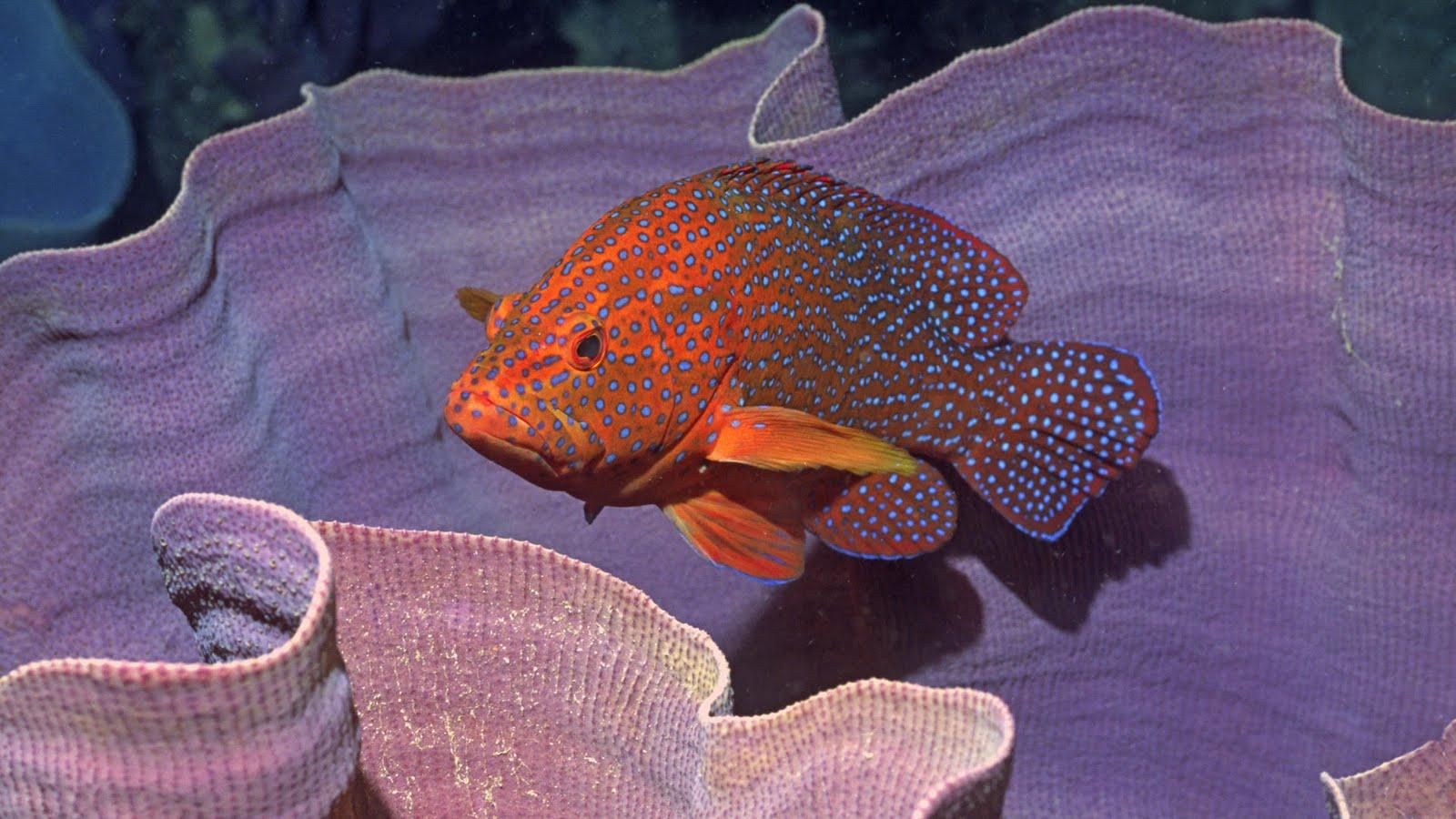 живые обои аквариум с рыбками на рабочий стол