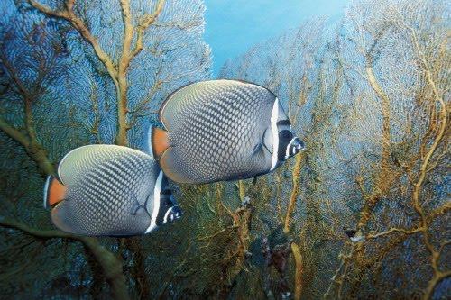 Viaje por el fondo del mar V (5 fotos de animales acuáticos)