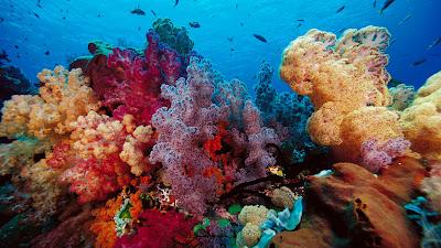 Peces, tortugas, focas, tiburones, corales, medusas y fondo marino - Animales Acuáticos - SeaBed
