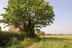 land surrounding St Peters church, Aldborough Hatch