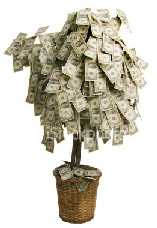 a Money Tree