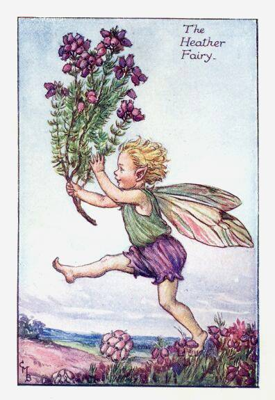 Heather Floer Fairy' by Cicerly Mary Barker