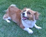 Fofinha, a minha cadela