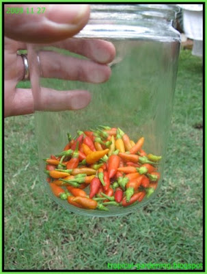 organic chili garlic insect repellent