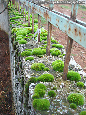 The Moss Overpowered the Concrete Fence
