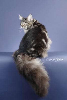 11 Kucing terkenal di dunia (bagi pengemar kucing) Ha