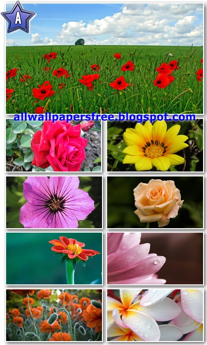80 Beautiful Flowers Wallpapers Full HD 1080p