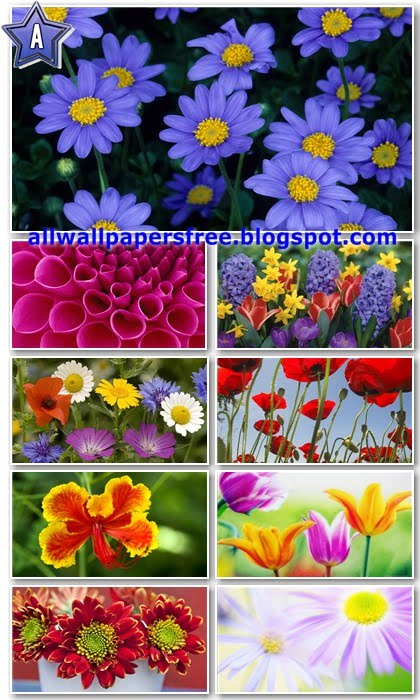 40 Colorful Flowers Wallpapers Full HD 1080p