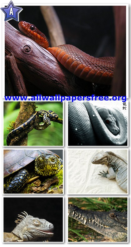 140 Amazing Reptiles Wallpapers 1600 X 1200