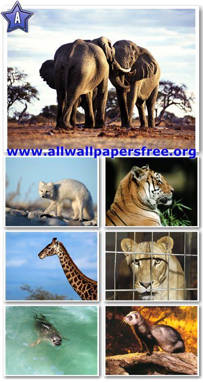 100 Amazing Animals Wallpapers 1600 X 1200 [Set 10]
