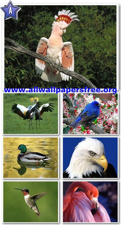60 Amazing Birds Wallpapers 1600 X 1200 [Set 1]