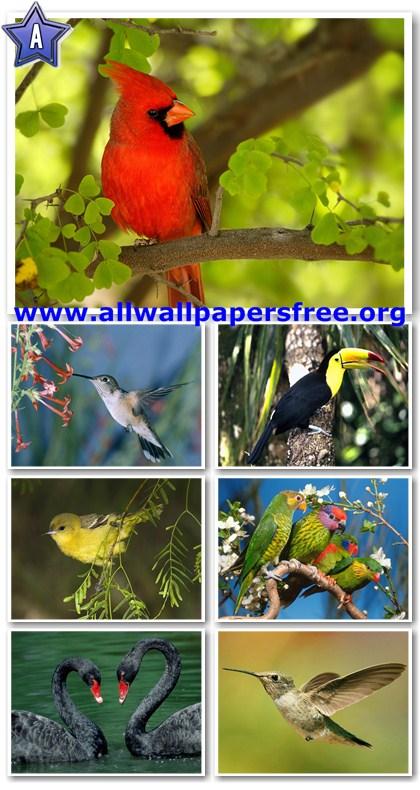 60 Amazing Birds Wallpapers 1600 X 1200 [Set 2]