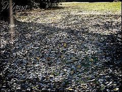 ESTAS FOTOGRAFÍAS ME LAS DEDICÓ MARGA, EL DÍA INTERNACIONAL DE LA POESÍA 21 DE MARZO 2010