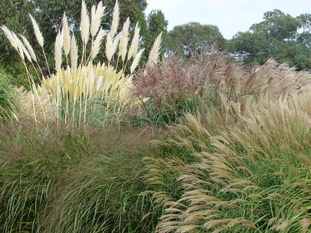 Paisajismo pueblos y jardines el jard n de gram neas for Ver plantas para jardin
