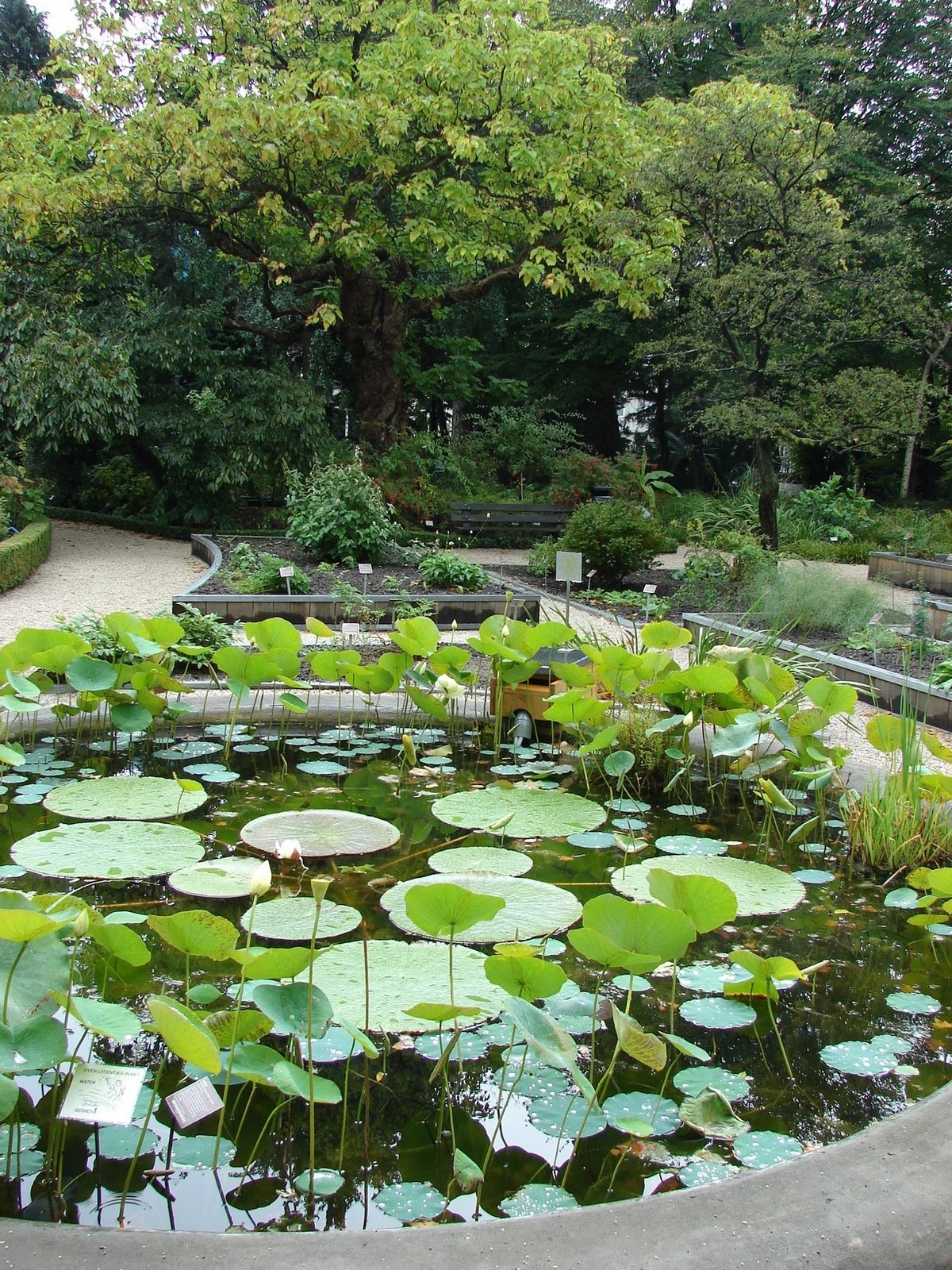 Paisajismo pueblos y jardines hortus botanicus jard n for Jardines costa rica