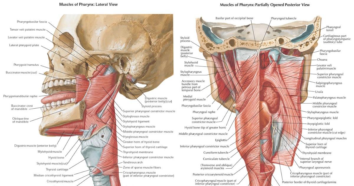 Ausgezeichnet Nette Anatomie Karten Galerie - Anatomie Ideen ...