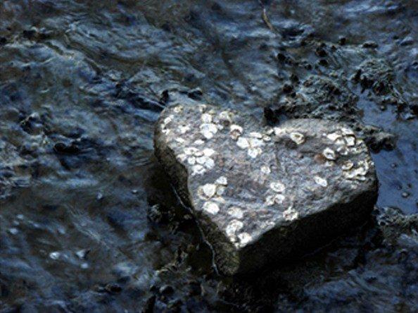 Agar Hati tak Sekeras Batu